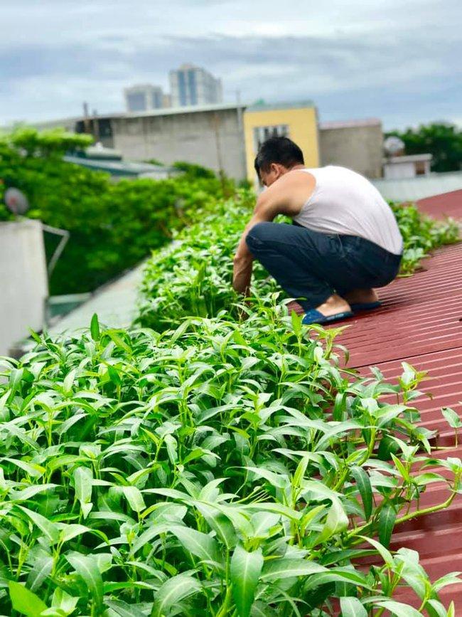 Tận dụng máng nước trên nóc nhà để trồng muống, bà nội trợ xa xứ có ngay vườn rau xanh - sạch ăn quanh năm - Ảnh 3.