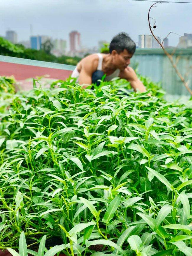 Tận dụng máng nước trên nóc nhà để trồng muống, bà nội trợ xa xứ có ngay vườn rau xanh - sạch ăn quanh năm - Ảnh 2.