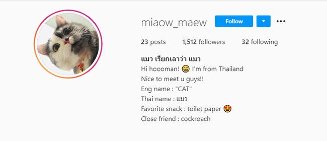 """Dân mạng phát cuồng vì bé mèo """"2 mặt"""" ú na ú nần đến từ Thái Lan - Ảnh 1."""