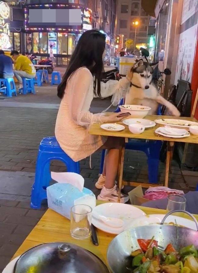 """Chú chó Husky đi ăn cùng chủ nhưng chạy sang bàn bên đòi ngồi cùng gái xinh, còn giở trò """"ăn cháo đá bát"""" khiến cô gái khóc thét - Ảnh 2."""