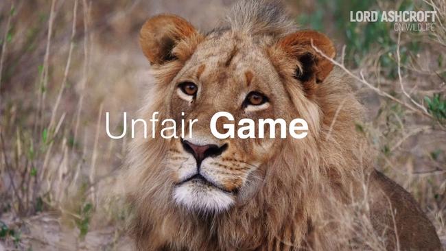 Số phận bi thảm của hổ, sư tử nuôi nhốt ở Nam Phi: 12.000 cá thể chờ chết phục vụ săn bắn mua vui và lấy xương cốt  - Ảnh 3.