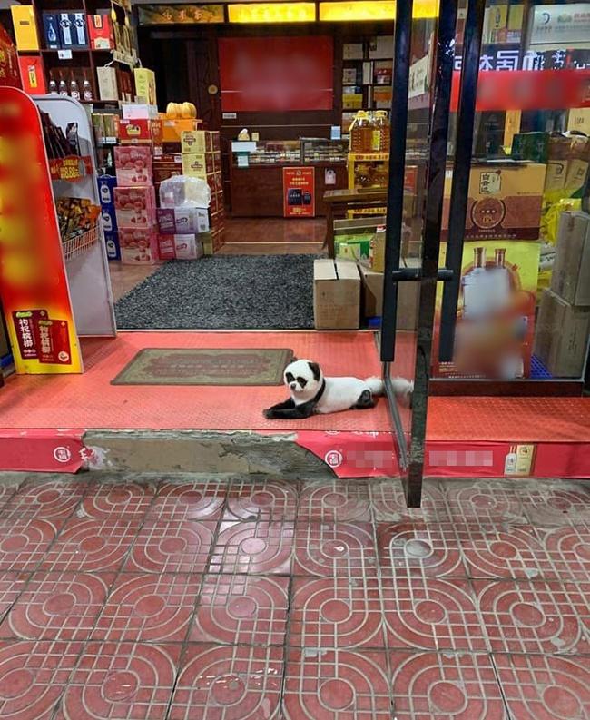 """Con vật kỳ lạ nằm buồn thiu trước cửa tiệm tạp hóa khiến ai cũng phải ngoái nhìn, ngạc nhiên vì bộ lông giống hệt """"quốc bảo"""" gấu trúc - Ảnh 1."""