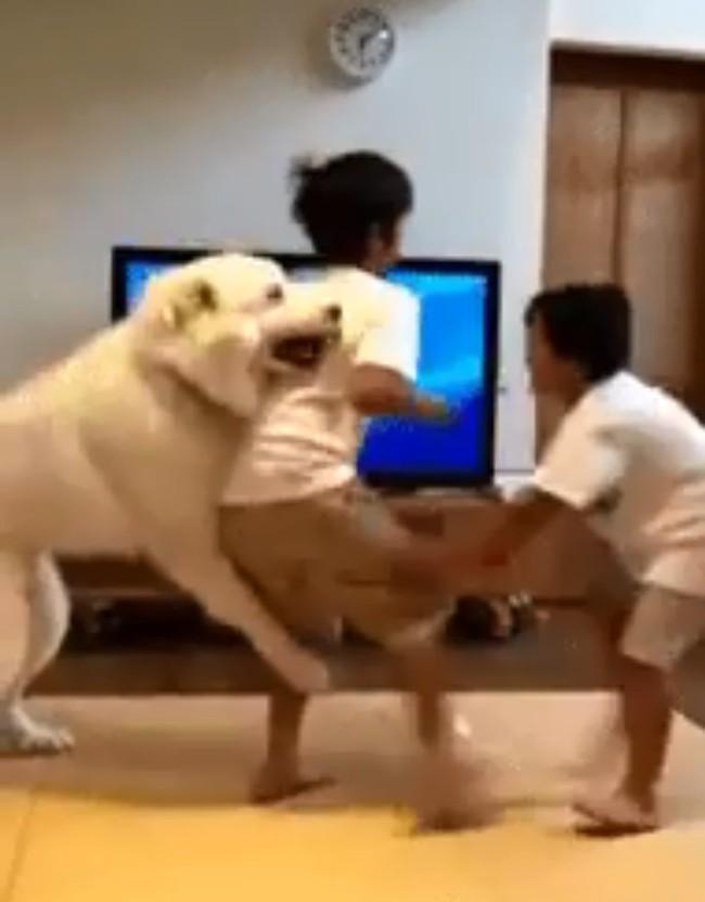 """Hai anh em háu chiến đánh nhau, chú chó cuống quýt can ngăn, nhưng dân mạng lại soi ra sự thiên vị trắng trợn của """"bảo mẫu"""" 4 chân này! - Ảnh 4."""