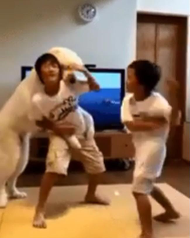 """Hai anh em háu chiến đánh nhau, chú chó cuống quýt can ngăn, nhưng dân mạng lại soi ra sự thiên vị trắng trợn của """"bảo mẫu"""" 4 chân này! - Ảnh 3."""