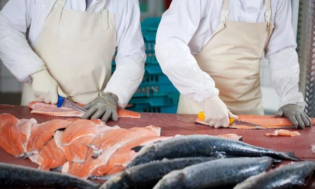 Trung Quốc dừng nhập cá hồi từ châu Âu vì sợ COVID-19 - Ảnh 1.