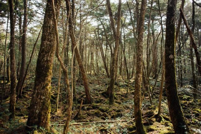 Khu rừng tự sát Aokigahara: Nơi tăm tối và im lặng tuyệt đối với những câu chuyện rùng rợn đầy ám ảnh - Ảnh 2.