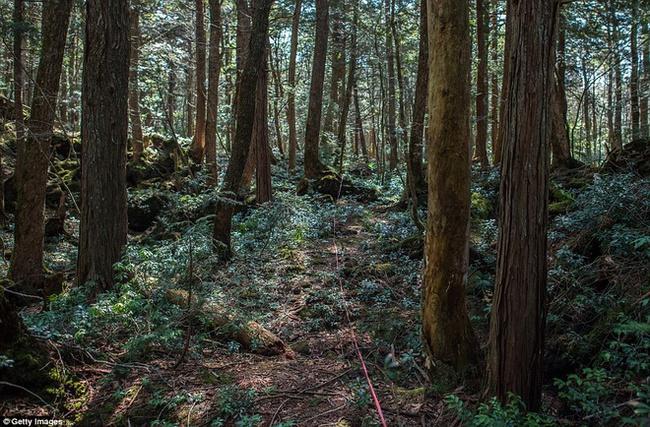 Khu rừng tự sát Aokigahara: Nơi tăm tối và im lặng tuyệt đối với những câu chuyện rùng rợn đầy ám ảnh - Ảnh 5.