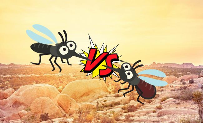 Mỹ chống lại loài muỗi bằng cách thả 750 triệu con muỗi ra môi trường - Ảnh 1.