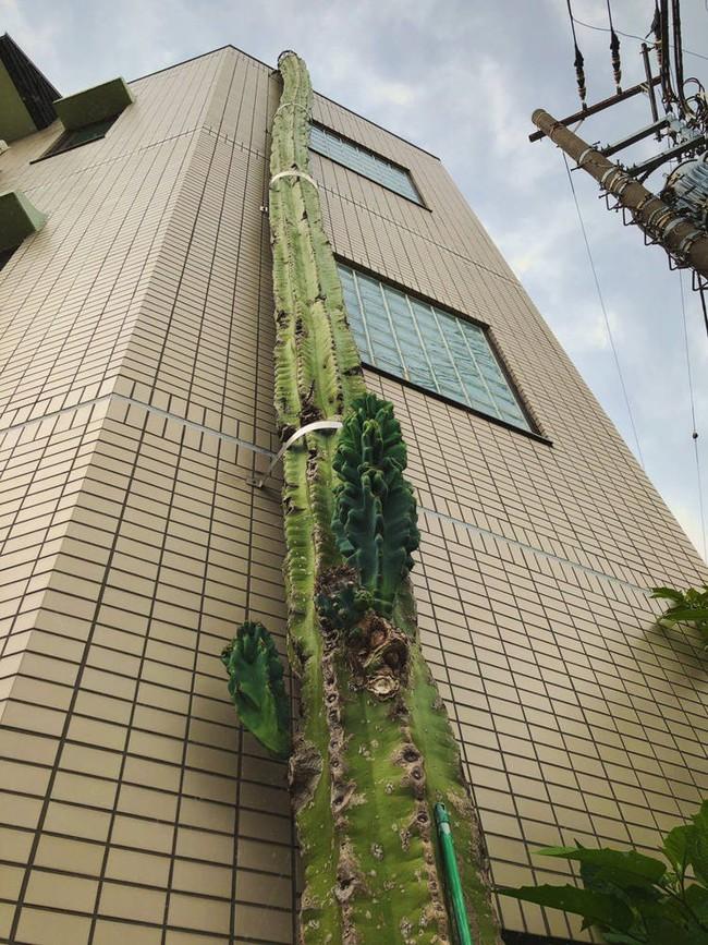 Cột cao từ chân đến nóc nhà nhìn xa ngỡ đường ống nước nhưng lại gần mới biết sự thật quá đỗi vi diệu - Ảnh 3.