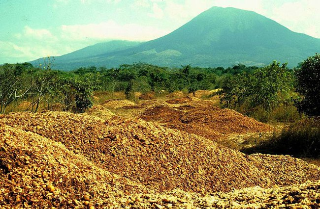 12000-tonne-orange-peel-forest-costa-rica-5cc94d669900c700-15936163920871226775909.jpg