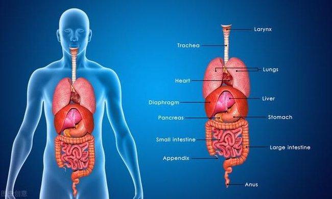 """Bất thường xuất hiện ở 5 bộ phận trên cơ thể, cho thấy các cơ quan nội tạng quá """"bẩn"""" - Ảnh 1."""