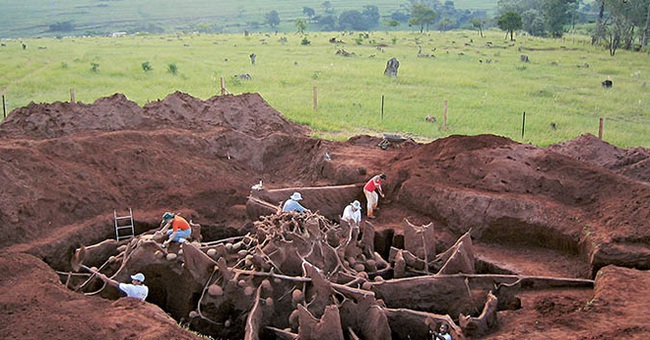 """Đổ 10 tấn xi măng xuống tổ kiến dưới lòng đất, các nhà khoa học không thể tin nổi vào mắt mình khi khám phá ra """"thành phố khổng lồ"""" sâu 8m, rộng 46m2 dưới lòng đất - Ảnh 2."""
