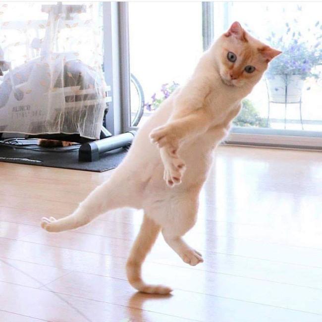 """Đại boss mèo nhảy hip hop cực """"nghệ"""" nhưng hậu quả lại """"dẹo"""" vô cùng khiến các con sen vừa buồn cười vừa thương - Ảnh 1."""