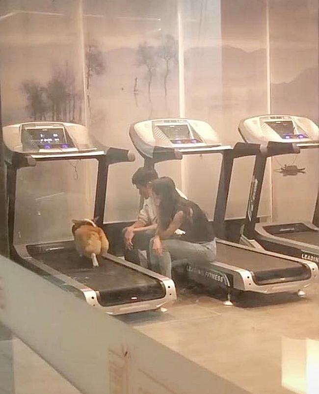 """""""Boss"""" quá béo nên phải mang đến phòng gym tập chạy bộ, 2 """"con sen"""" lầm lũi ngồi cạnh động viên khiến dân tình cười lăn lóc - Ảnh 1."""
