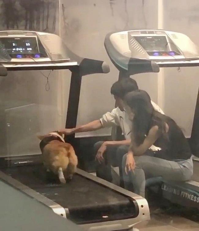 """""""Boss"""" quá béo nên phải mang đến phòng gym tập chạy bộ, 2 """"con sen"""" lầm lũi ngồi cạnh động viên khiến dân tình cười lăn lóc - Ảnh 2."""
