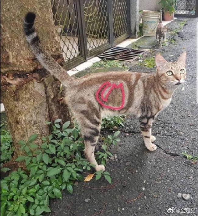 """Chú mèo """"xăm hình"""" siêu thú vị, không ngờ tạo hóa lại có những lúc """"khéo tay"""" như thế này - Ảnh 2."""