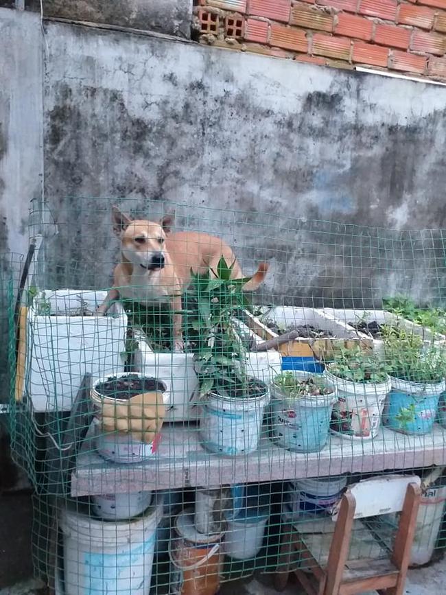 Kỳ công trồng rau nhưng  - Ảnh 3.
