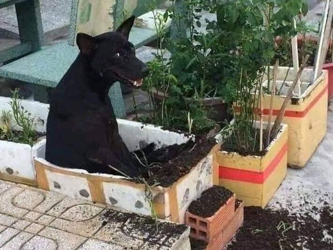 Kỳ công trồng rau nhưng  - Ảnh 1.