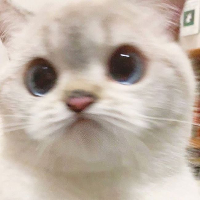 expressive-cat-nana-1-2-5f16cfee907df700-15954099449491329666886.jpg