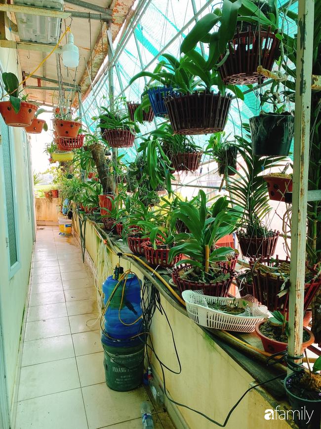 Ngắm ngôi nhà 3 tầng ở Thái Bình với hành lang được trồng 100 giò phong lan khoe sắc 4 mùa khiến hàng xóm đi qua ai cũng ngẩn ngơ - Ảnh 1.