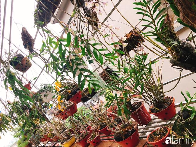 Ngắm ngôi nhà 3 tầng ở Thái Bình với hành lang được trồng 100 giò phong lan khoe sắc 4 mùa khiến hàng xóm đi qua ai cũng ngẩn ngơ - Ảnh 2.