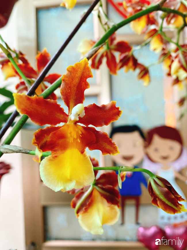 Ngắm ngôi nhà 3 tầng ở Thái Bình với hành lang được trồng 100 giò phong lan khoe sắc 4 mùa khiến hàng xóm đi qua ai cũng ngẩn ngơ - Ảnh 4.