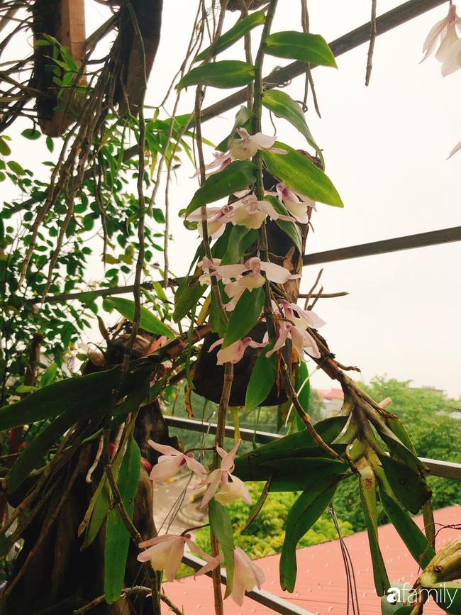 Ngắm ngôi nhà 3 tầng ở Thái Bình với hành lang được trồng 100 giò phong lan khoe sắc 4 mùa khiến hàng xóm đi qua ai cũng ngẩn ngơ - Ảnh 5.