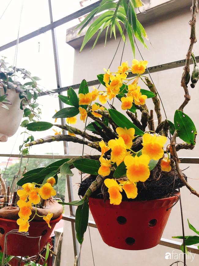 Ngắm ngôi nhà 3 tầng ở Thái Bình với hành lang được trồng 100 giò phong lan khoe sắc 4 mùa khiến hàng xóm đi qua ai cũng ngẩn ngơ - Ảnh 7.