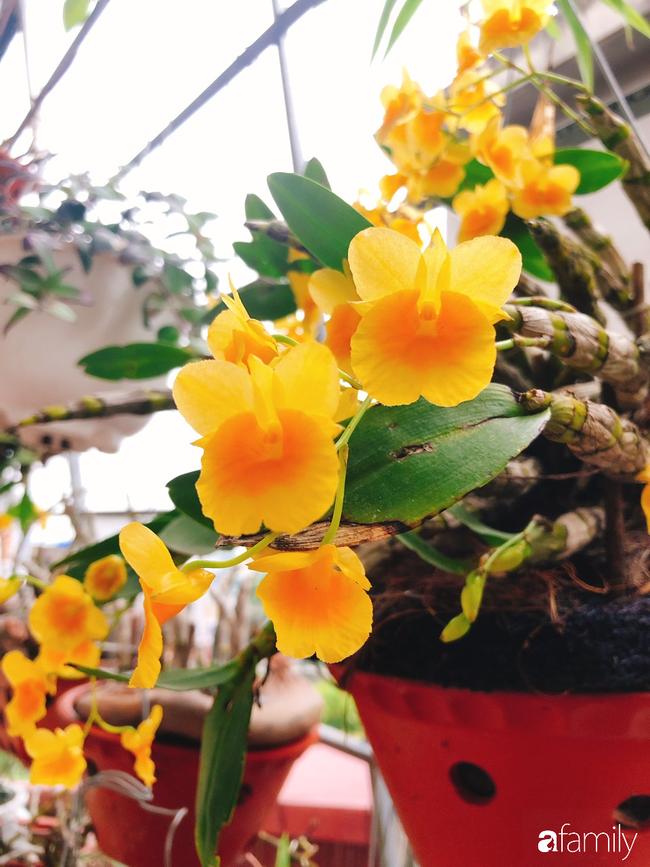 Ngắm ngôi nhà 3 tầng ở Thái Bình với hành lang được trồng 100 giò phong lan khoe sắc 4 mùa khiến hàng xóm đi qua ai cũng ngẩn ngơ - Ảnh 12.