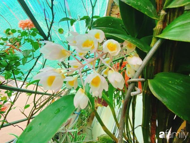 Ngắm ngôi nhà 3 tầng ở Thái Bình với hành lang được trồng 100 giò phong lan khoe sắc 4 mùa khiến hàng xóm đi qua ai cũng ngẩn ngơ - Ảnh 18.