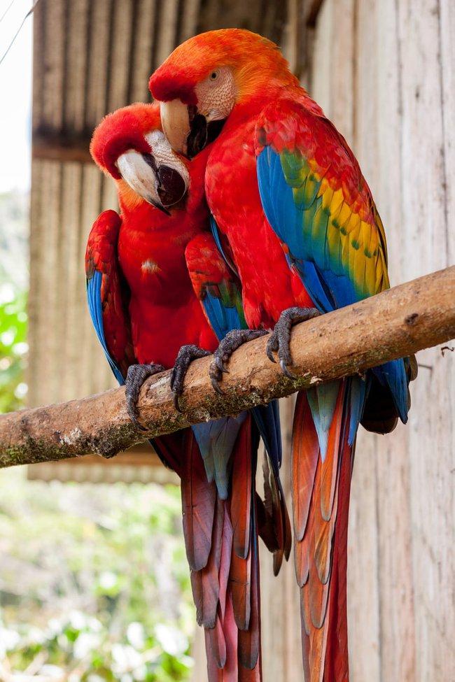 Nếu thấy chim bay vào cửa sổ, bạn sẽ làm gì? Điều đó tiết lộ cuộc sống sắp tới của bạn sẽ gặp phải những chướng ngại hay may mắn bình an - Ảnh 4.