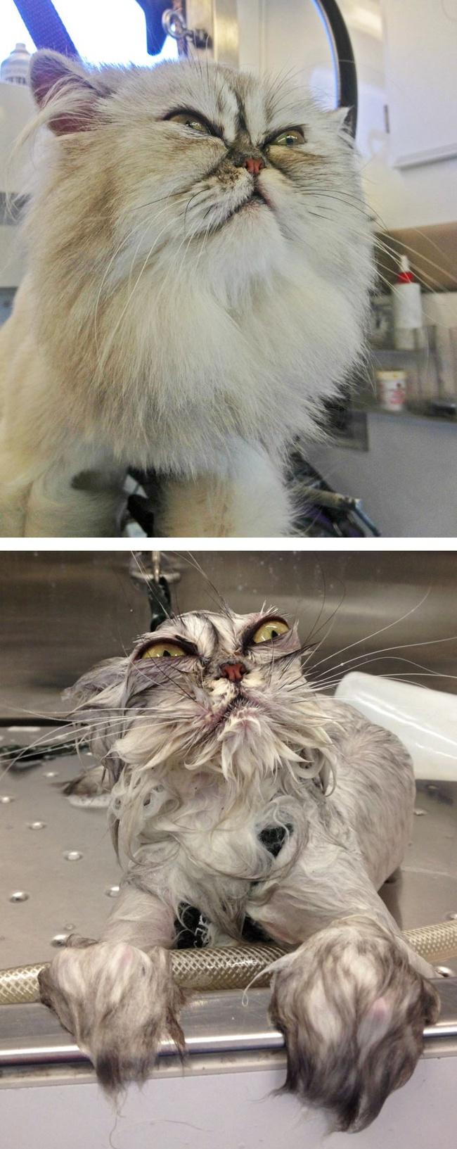 """Cười vỡ bụng với loạt ảnh hậu trường khi đi tắm của dàn thú cưng, đáng yêu cỡ thiên thần cũng hóa thành """"ác quỷ"""" trong chốc lát! - Ảnh 1."""