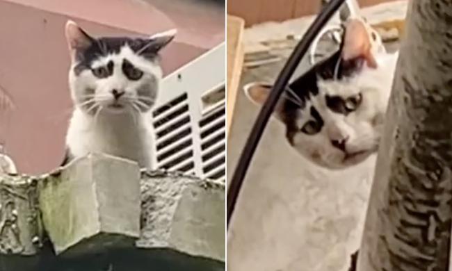 Mèo nổi tiếng vì mặt khổ như sắp bị đuổi việc đến nơi - Ảnh 2.