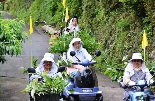 """Kỳ lạ nghề hái lá cây giúp """"hội chị em cao tuổi"""" Nhật Bản thu nhập hơn... 50 tỷ đồng/năm - Ảnh 1."""