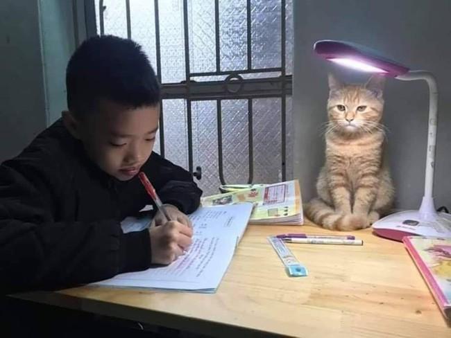 """Cười ngặt nghẽo với """"gia sư"""" kèm cậu bé học bài mà lúc nằm lúc ngồi ngủ gật, nhưng nhìn chân dung thì không nỡ ai trách mắng  - Ảnh 12."""