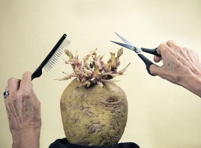 """Bức ảnh cụ ông giơ kéo cắt tóc cho """"quái vật"""" kỳ lạ gây rợn người nhưng sự thật lại khiến cư dân mạng phải bật cười - Ảnh 1."""