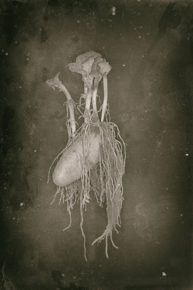 """Bức ảnh cụ ông giơ kéo cắt tóc cho """"quái vật"""" kỳ lạ gây rợn người nhưng sự thật lại khiến cư dân mạng phải bật cười - Ảnh 3."""