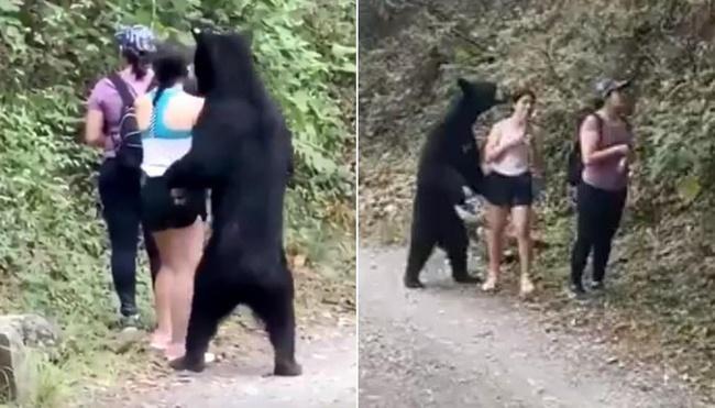 """Dân Mexico tức tối vì gấu đen bị thiến sau khi """"xàm sỡ"""" du khách - Ảnh 1."""