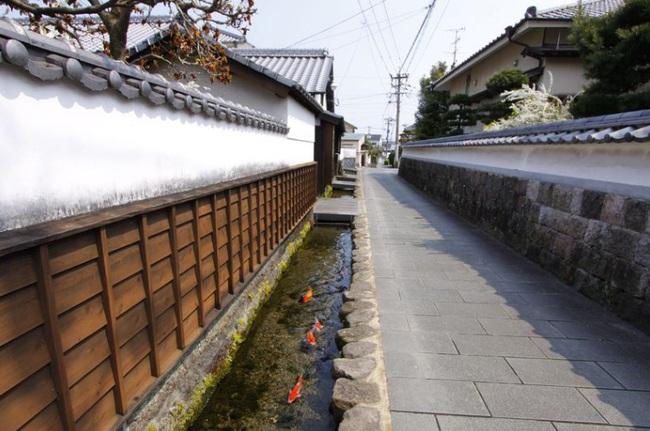 Chứng minh độ sạch của cống rãnh, Nhật Bản nuôi cá Koi thành từng đàn dưới làn nước cống trong vắt - Ảnh 8.
