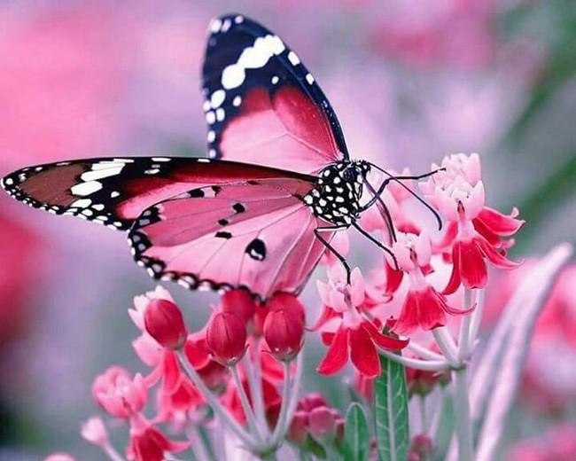Bí mật không hề dễ chịu về loài bươm bướm: Phía sau những cánh bướm xinh đẹp rập rờn trong vườn hoa là cảnh hãm hiếp, ăn thịt để duy trì sự sống - Ảnh 2.