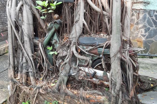 Thực hư hợp thể cây cổ thụ ôm chiếc xe máy gần 30 năm với biết bao lời đồn đoán được rao bán với giá 7 tỷ đồng - Ảnh 3.
