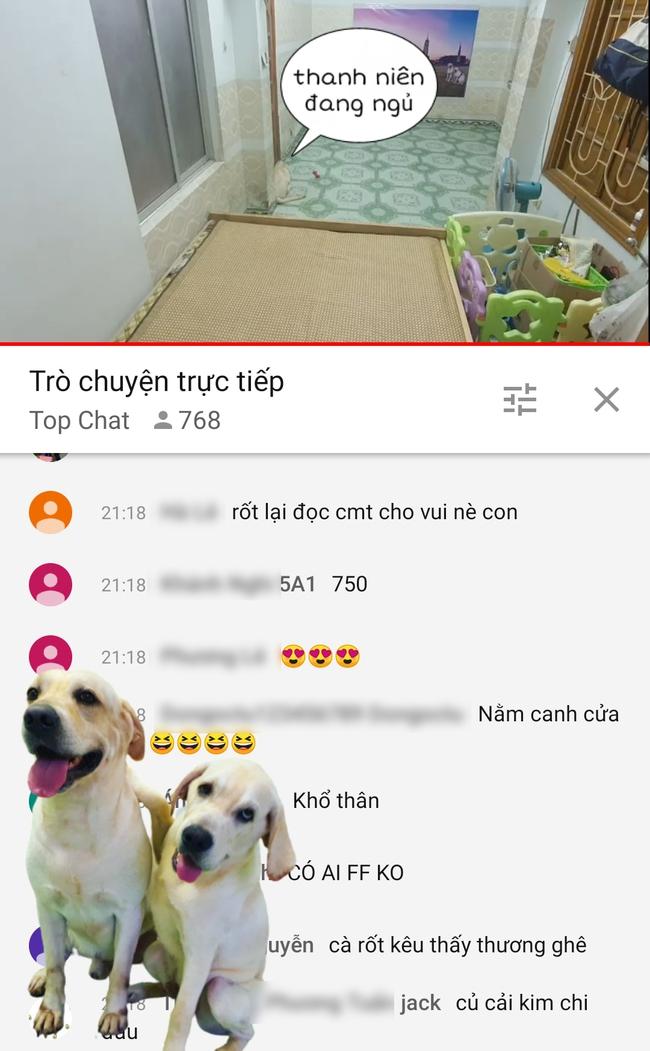 Phát trực tiếp video nhờ trông chó hộ trên Youtube, chủ kênh bất ngờ khi có tới gần 800 người nhận làm công việc tình nguyện này chỉ trong 30 phút - Ảnh 1.