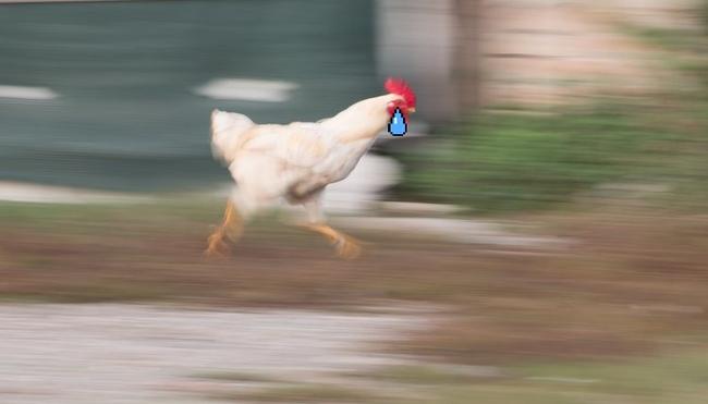 """Hội ăn chay Tây Ban Nha đòi nhốt riêng gà để """"con mái không bị con trống cưỡng hiếp"""" - Ảnh 5."""