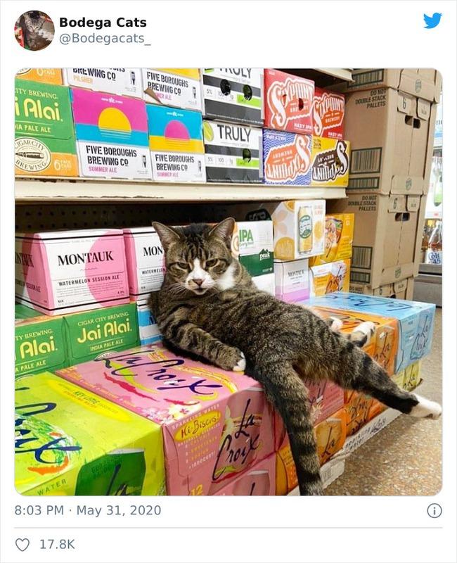 Tổng hợp bọn mèo láo lếu khệnh khạng luôn cho mình là ông chủ - Ảnh 1.