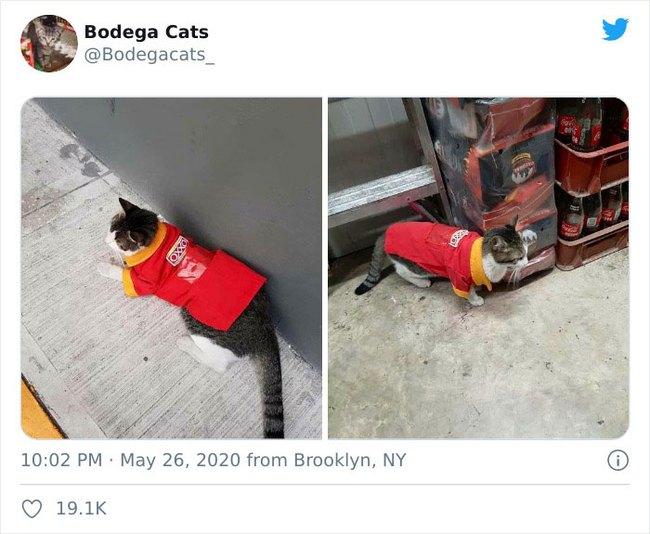 Tổng hợp bọn mèo láo lếu khệnh khạng luôn cho mình là ông chủ - Ảnh 19.