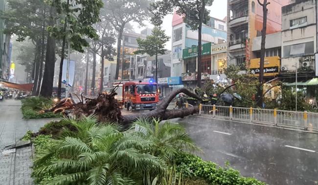 Người đàn ông bị cây cổ thụ đè trong mưa lớn ở TP.HCM chấn thương nặng, phải phẫu thuật gấp - Ảnh 3.