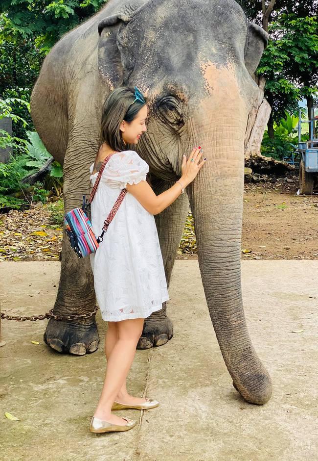 Thanh Vân Hugo âu yếm chú voi khổng lồ.