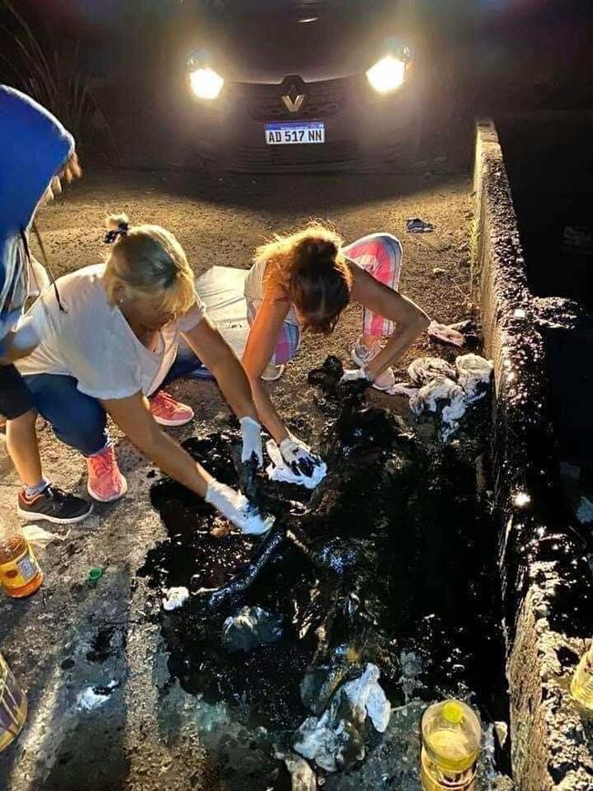 Thấy con chó toàn thân bị nhựa đường phủ kín, những người phụ nữ này đã mang về làm một việc không tưởng, nhìn bức ảnh cuối cùng ai cũng choáng - Ảnh 3.