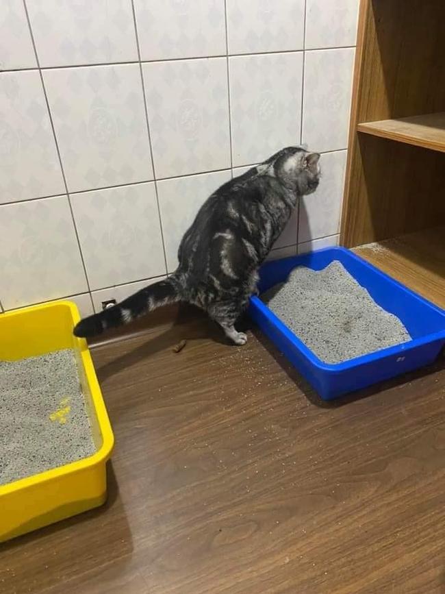 """Tận cùng của bất lực là đây: Mua chậu, đổ cát đầy đủ nhưng chú mèo vẫn chọn """"giải quyết nỗi buồn"""" theo cách """"sen"""" nhìn mà tức! - Ảnh 3."""