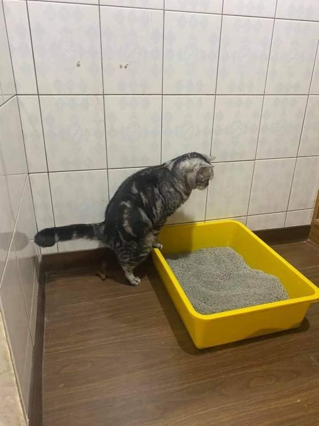"""Tận cùng của bất lực là đây: Mua chậu, đổ cát đầy đủ nhưng chú mèo vẫn chọn """"giải quyết nỗi buồn"""" theo cách """"sen"""" nhìn mà tức! - Ảnh 4."""